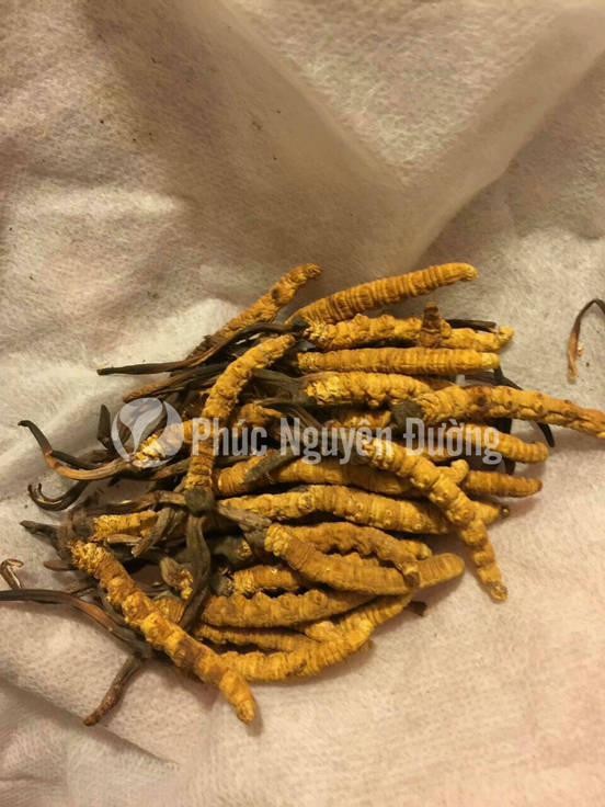 Đông trùng hạ thảo có thể dùng để ngâm rượu, hãm trà