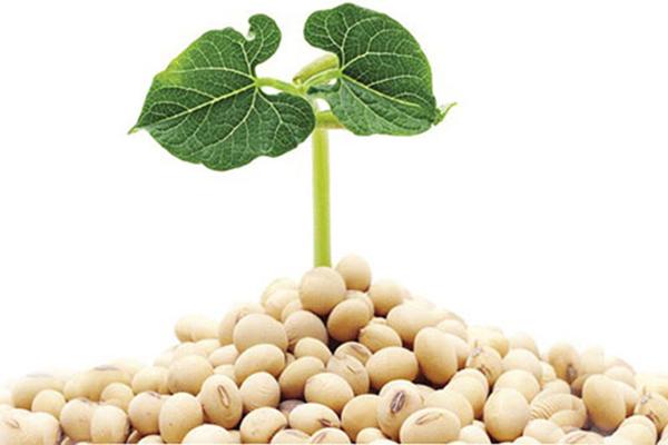 Cách sử dụng tinh chất mầm đậu nành