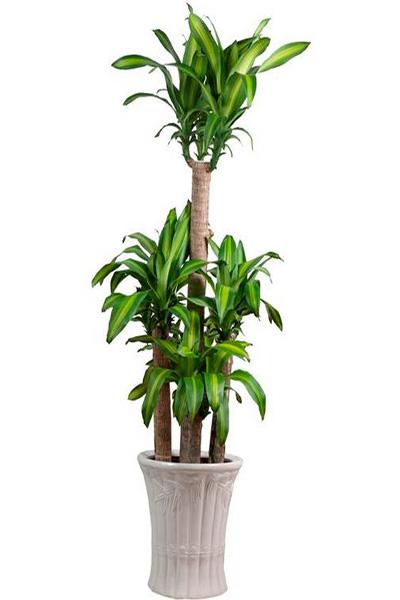 Lựa chọn loại cây gì để đặt trong các phòng cho hợp phong thủy?