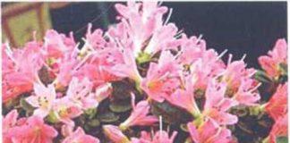 Hoa cỏ và phong thủy P1