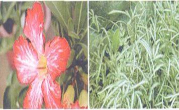 Hoa cỏ và phong thủy p2