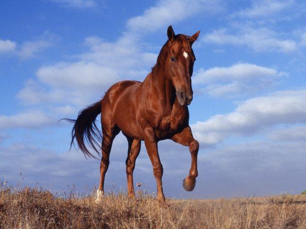 Nằm mơ thấy ngựa đánh số gì? Đây là điềm lành hay dữ?